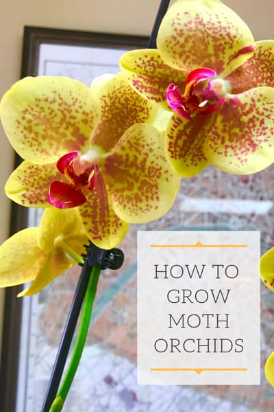 Orchid Plant Care Make Your Orchids Thrive