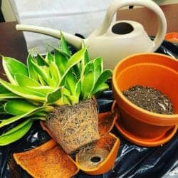 How to repot