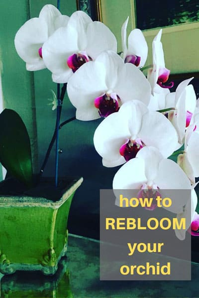 What To Do With Orchids After Blooming 3 Easy Options