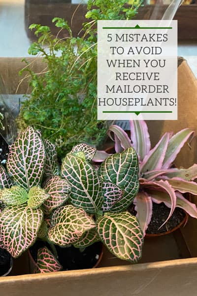 houseplants-mail-order