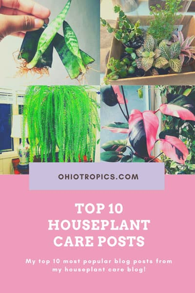 houseplant-care-blog